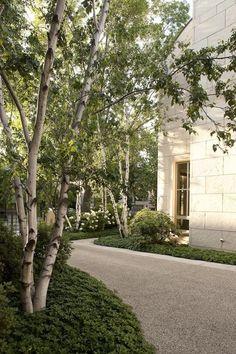 Multi-stemmed BIRCH trees