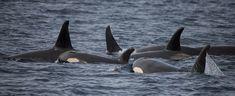 Do you speak whale? Sloth, Whale, Sloth Animal, Whales, Sloths