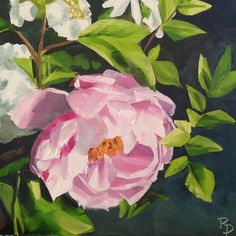 """Blooms #4"" original fine art by Rachel Dowd"