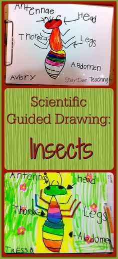 15 Best insect body parts images Insect body parts, Insects, Ants
