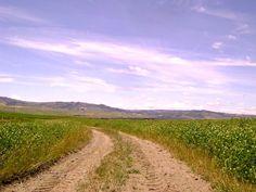"""This is a hidden dirt road path in Val d'Orcia (south Tuscany) and in the next pic...my dog Bobo Questo è uno dei sentieri nascosti in val d'Orcia (a sud di Siena) che vi proponiamo per le nostre passeggiate  a 6 zampe e """"senza guinzaglio"""" guidate.  Nella prossima foto...il mio cane Bobo"""