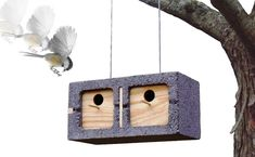 Ang mga resulta ng Google para sa http://www.thepetscentral.com/wp-content/uploads/2009/12/Bird-house16.jpg