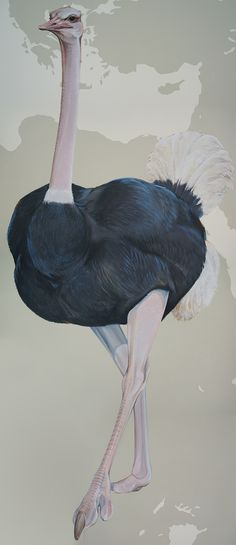 Ostrich by Ink Dwell for the Cornell Lab of Ornithology's centennial