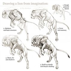 Animal anatomy tutorial , tutorial tieranatomie , tutoriel d'anatomie a. Lion Anatomy, Animal Anatomy, Anatomy Drawing, Human Anatomy, Animal Sketches, Animal Drawings, Drawing Sketches, Drawing Animals, Sketching
