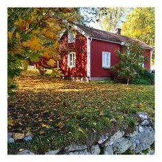 """""""Var ute med hundarna idag. Vilken ljuvlig doft hösten har!! Dessutom när jag ser dessa ljuvliga röda hus, ångrar jag mig att vi inte målade vårt hus just…"""""""