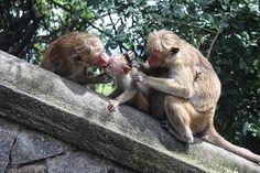 Motherlove monkeys
