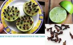 Has anyone tried this? Does it work? How To Get Rid Of Mosquitoes In The Yard