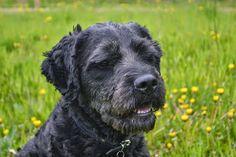 Gårdstunet Hundepensjonat: Gutta krutt er i storform i dag! Herlige hunder på...