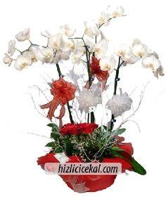 Vip Orkide & Güller  Hızlı Çiçek Al ile sevdiklerinize aynı gün teslimat seçeneği ile 3 dal köklü saksı orkide çiçeği ve 11 adet kırmızı gül konsepti sipariş edin.  http://www.hizlicicekal.com/cicekler/cicekciler/cicek/121/vip-orkide--guller/