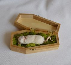 Taxidermy mouse by NimbleMatters on Etsy - my new favorite shop on Etsy!!