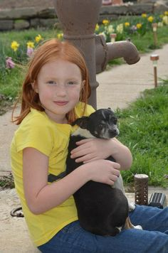 Rat Terriers:  Small Dogs and Good Family Pets
