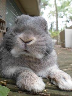 i was a lilac sky, babyanimalgifs: Cutest bunny