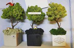 아기자기한 느낌의 나무형태의 모스입니다~ 나무 모스 색 수정가능합니다~ 서랍장 위나 협탁위에 두면 분위... Moss Wall Art, Moss Art, Diy Wall Art, Moss Graffiti, Hotel Flowers, Modern Floral Arrangements, Room With Plants, Moss Garden, Hotel Decor
