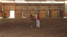 horse training - YouTube