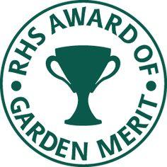 See RHS lists of top AGM garden-worthy plants, fruit & veg / RHS Gardening Fargesia, Clematis Montana, Stipa, Planting Shrubs, Buy Plants, Patio Plants, How To Attract Birds, Mediterranean Garden, Evergreen Shrubs