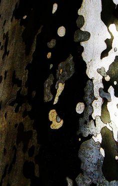yama-bato:    By yama-bato  © yama-bato, 2011