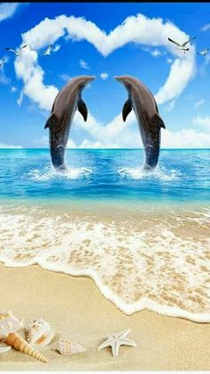 Dolphins ~ Friends Forever!