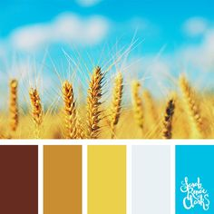Field colors // Summer Color Palettes // Click for more color schemes, mood boards and color combinations inspired by Summer at https://sarahrenaeclark.com #color #colorscheme #colorpalette