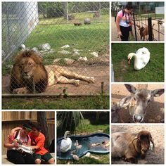 Alabama Gulf Coast Zoo _ Family Attractions Things To Do In Gulf Shores Alabama