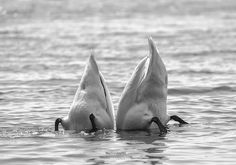 We're meant to be together by Maurizio Di Renzo - Photo 107888559 - Meant To Be Together, Birds, Black And White, Animals, Collection, Animales, Black N White, Animaux, Black White