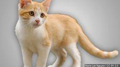 #panama #orbispanama Panama City commissioners table proposed ban on feeding stray cats - WJHG-TV #KEVELAIRAMERICA #orbispanama