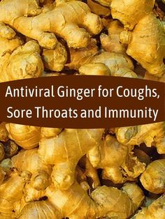 Ginger tea is antiviral and eases a sore throat, persistent cough and other symptoms of colds and flu as well as boosting immunity and aiding recovery