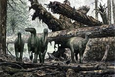 Paleo-Art: Douglas Henderson.  Iguanodons