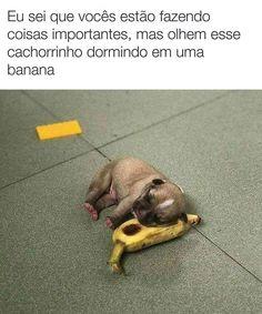 new Ideas funny animals dogs sad Funny Baby Memes, Funny Babies, Haha Funny, Funny Dogs, Cute Dogs, Animals And Pets, Baby Animals, Funny Animals, Cute Animals