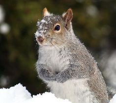 Snowy Nose by BarbL - Cuteness Overload Photo Contest