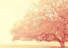 tree photograph that was just a dream dreamy by MyanSoffia on Etsy,