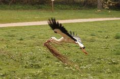 Überladener Storch by foto vermis on 500px