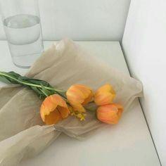 orange aesthetic tulips light korean soft minimalistic kawaii cute g e o r g i a n a : a e s t h e t i c s Orange Aesthetic, Beige Aesthetic, Korean Aesthetic, Aesthetic Colors, Flower Aesthetic, Aesthetic Photo, Aesthetic Pictures, Japanese Aesthetic, My Flower