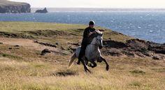 """icelandichorsepower: """" """" Sigursteinn frá Húsavík Icelandic Horse"""