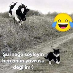 Funny Times, Karma, Pets, Animals, Instagram, Herbs, Animals And Pets, Animales, Animaux