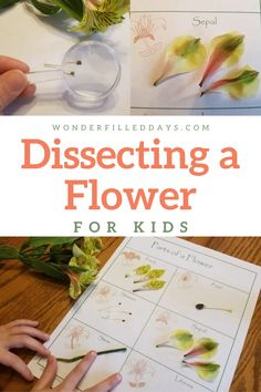 Dissecting a Flower (For Kids) - Wonder-Filled Days- A step-by-step guide to flower dissection for children. Flower Activities For Kids, Hands On Activities, Stem Activities, Children Activities, Science Projects, Projects For Kids, School Projects, Stem School, Stem Classes