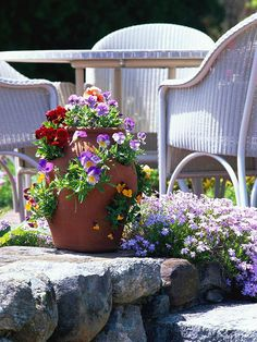 "Cool-Season Containers: Layering Pansies ""A gorgeous spring container garden doesn't have to be complicated. Here, a variety of pansies and violas add charm and color to a strawberry jar. Use a mix of colors for a flamboyant look, or limit your pansies to one color for a more elegant, soothing presentation."""