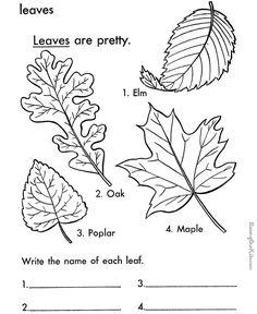 Printable Leaf Coloring Page