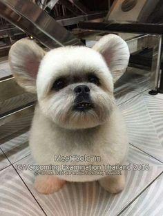 Asian Dogs, Dog Haircuts, Dog Grooming Tips, Maltese, Shih Tzu, French Bulldog, Bathing, Hair Cuts, Pets