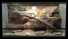 bearded dragon vivarium - Google Search