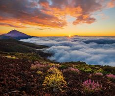 Experiences on Mount Teide – stars, hiking trails and Martian landscapes World Records, The Martian, 15th Century, Beach Photos, Tenerife, World Heritage Sites, Hiking Trails, Travel Inspiration, Places To Go