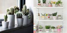 Decoração: Plantinhas no apartamento (via Bloglovin.com )