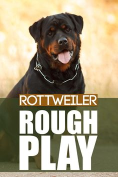 Does your Rottweiler puppy or dog play rough? Check out our latest video on how to address this behaviour with tips and insights. More awesome dog information at Fenrir Canine Show and Fenrir Canine Leaders. Best Guard Dog Breeds, Best Guard Dogs, Best Dogs, Rottweiler Dog Breed, German Dog Breeds, Dog Information, New Puppy, Training Your Dog, Latest Video