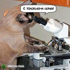 Foto exclusiva de gata no microscópio