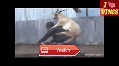 Hillarious Cute Animals Videos Cuteness Overloaded You Will Dir Laughing  Because You Deserve A Laugh Keep Laughing Keep Sharing It May Make Someone Happy For A Few Moments Enjoy Peace  on Pet Lovers