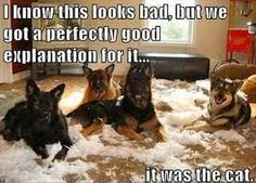 dogs funny - Google Search