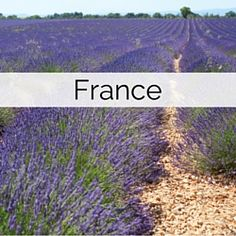PLANNING - Listed here are wedding suppliers in France who can help you create your dream destination wedding abroad. All come with with reviews and personal recommendations.
