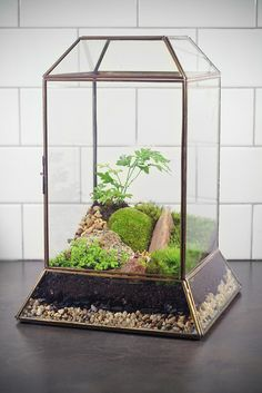 Large Leaded Glass Terrarium with moss.