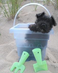 One of my friends at the beach with me I think he is stuck......l...