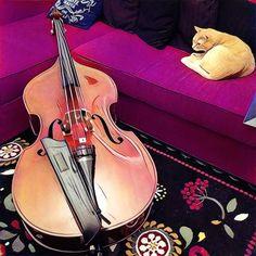 The bass and the cat  #doublebass #uprightbass #maxpierini #instapic #instacool #instagood #instadaily #picoftheday #contrabbasso #contrabbassista #music #musician #musicians #musica #musicista #blue #blues #jazz #rhythmnblues #pop #rock #bass #bassplayer #bassist #bassporn #followme #live #concert #gig #instalive