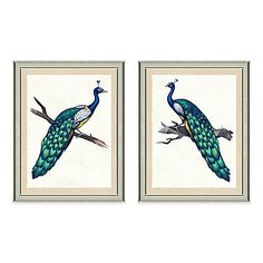 Peacock Framed Art Print Collection
